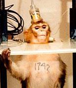 macaque experiments